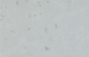Misty Carrera - 4141