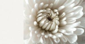 Pure White - Caesarstone
